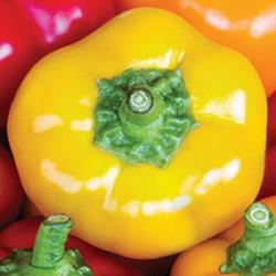 Yellow Cheese Pepper